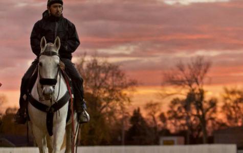 Pony boys ready the horses for race