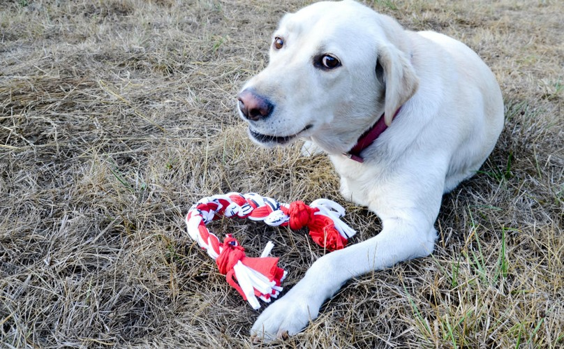 A couple old T-shirts, some braiding and knotting, and you've got a great pull toy for Fido.