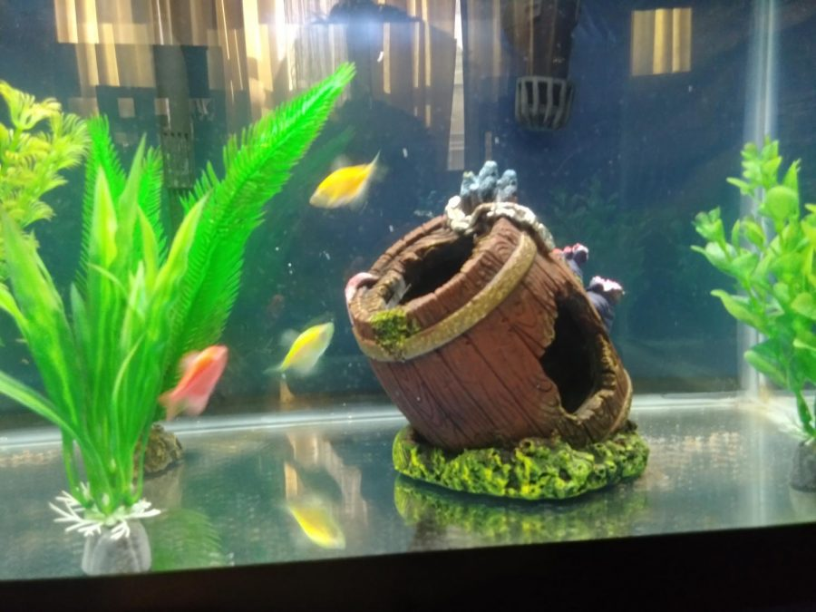 3 Glofish