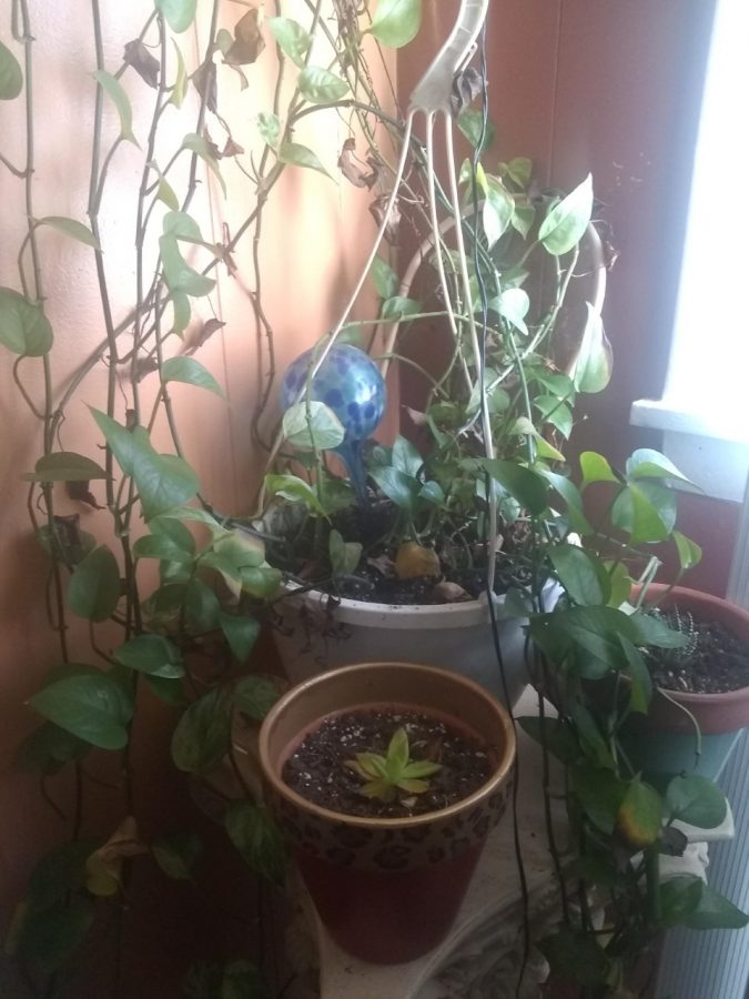 My+mom%27s+plant+she%27d+been+taking+care+of+for+more+than+five+years