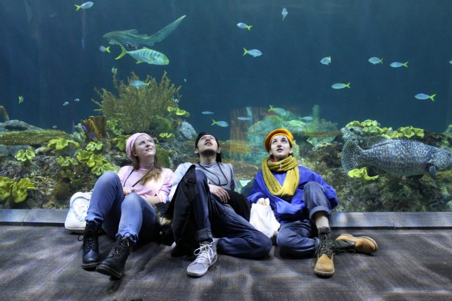 Three teenagers looking up to fish tank located in the Shedd Aquarium.